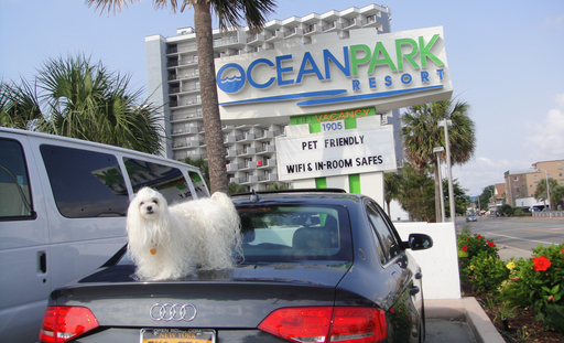 Ocean Park Resort, Myrtle Beach, is among TripAdvisor's list of top 10 pet-friendly properties in the U.S. (A TripAdvisor traveler photo)