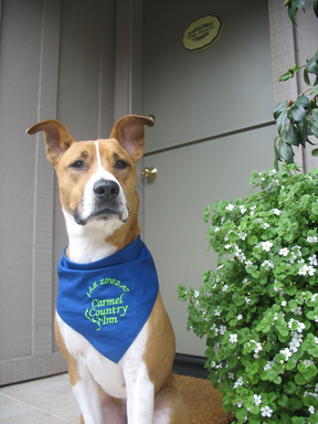 The Carmel Country Inn, number seven on TripAdvisor's list of the top U.S. pet-friendly hotels, welcomes four-legged friends. (A TripAdvisor traveler photo)