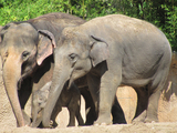 49267-02-saint-louis-zoo-elephants-sm