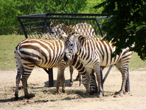 The Cape May County Park & Zoo is a great place to see a collection of critters and is number three on TripAdvisor's list of America's top 10 zoos. (A TripAdvisor traveler photo)