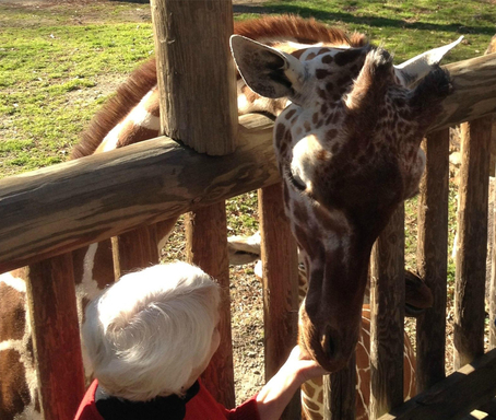 The Riverbanks Zoo and Botanical Garden houses an array of wildlife and is number four on TripAdvisor's list of the top 10 U.S. zoos. (A TripAdvisor traveler photo)