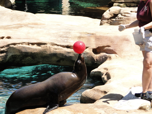 A seal enjoys a game of toss at the Memphis Zoo, the number five zoo in the U.S. according to TripAdvisor travelers. (A TripAdvisor traveler photo)