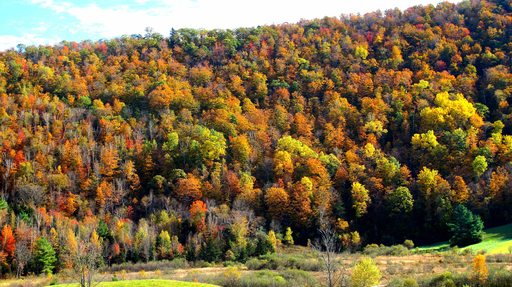 According to a recent TripAdvisor survey, 39 percent of U.S. travelers chose viewing foliage as their top fall activity. (A TripAdvisor traveler photo)