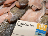 Yellow-rated-rockfish-sm