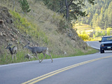 State-farm-insurance-estimates-collisions-deer-vehicles-sm