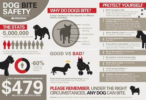 Horizontal format for dog bite safety infographic
