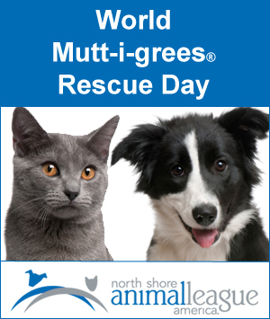 Mutt-i-grees® represent shelter pets around the world and they all share a common need, to find permanent loving homes.  For more information, visit Animal League.org.