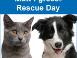 Mutt-i-grees-rescue-day-shelter-pets-sm