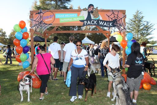 Over a thousand dogs and their owners were welcomed to the First Annual Scooby-Doo and Cesar Millan National Family Pack Walk in Los Angeles on Sunday, October 30.