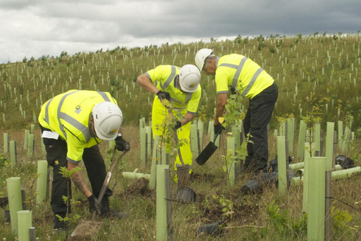DEWAR'S employees plant 100,000 indigenous trees at maturation facility in Central Scotland to naturally enhance and blend the site into the surrounding landscape.