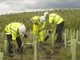 53407-dewars-employees-planting-trees-sm