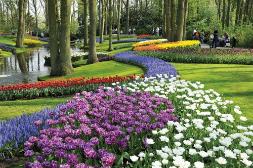 Keukenhof, a historic park covering an area of thirty-two hectares, full of tulips, hyacinths, daffodils and all the other spring bulbs. The floral displays in the park and the unique flower shows in the various pavilions are a glorious visual feast. Open