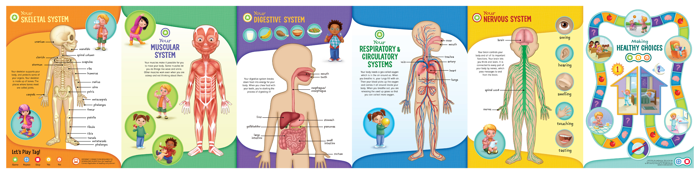 Pictures of The Human Body For Kids Human Body Kids