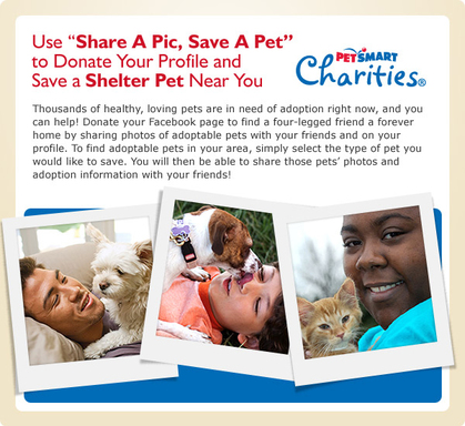 The Share a Pic, Save a Pet Facebook application allows you to save homeless pets in your community.
