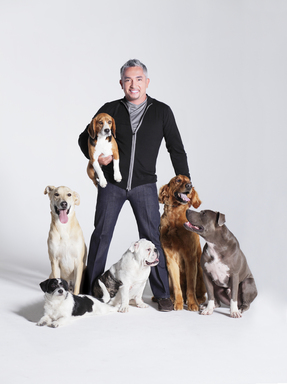 Cesar Millan and his dog pack.