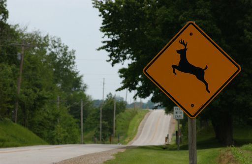 Be aware of posted deer crossing signs.  These are placed in active deer crossing areas.