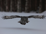 56806sp-discovery-frozen-planet-owl-sm