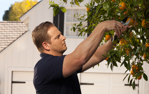 "In TruGreen's fall ""Grow Curb Appeal"" webisode, TV host Jason Cameron shows how to conduct corrective pruning in the fall to enhance a plant's appearance in the spring."
