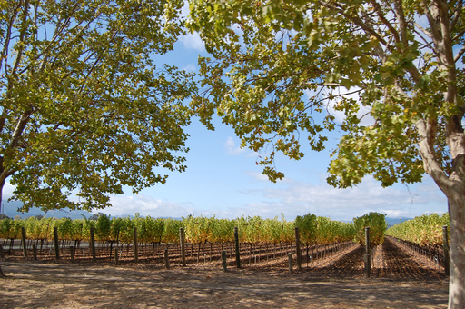 TripAdvisor's 2012 Travelers' Choice Wine Destinations awards named Napa Valley, California among the winners. (A TripAdvisor traveler photo)