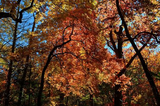Forty-four percent of travelers cited viewing colorful foliage as their favorite fall activity, according to TripAdvisor survey. (A TripAdvisor traveler photo)