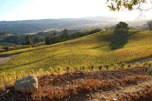 TripAdvisor reveals 29 percent of travelers will visit a vineyard this autumn, according to survey. (A TripAdvisor traveler photo)