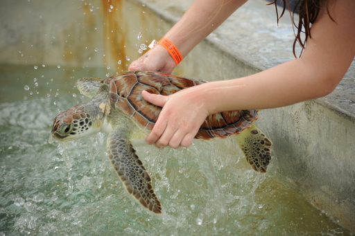 WSPA tested and found traces of Salmonella and E. Coli in the farm's turtle touch tank waters – meaning that visitors who handle the turtles are at risk for contracting these diseases.