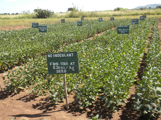 FBSciences has successfully completed two years of small plot replicated field trials at the CDI-run Mpherero Farm in Malawi.