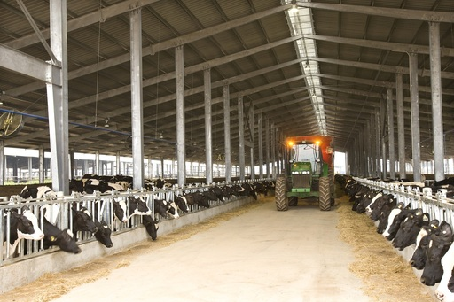 Economics Dairy Farming India http://aloesoul.com/test/dairy-farm-project