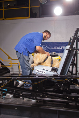 MGA Research Corp. staff preps a crash test dog for testing. Subaru and the Center for Pet Safety conducted a collaborative crash test study to test the effectiveness of popular pet harnesses.