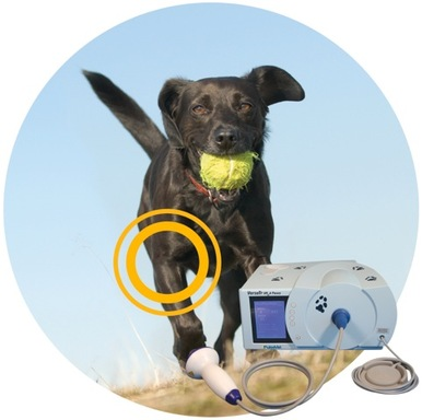 VersaTron4Paws shockwave device for healing pain and lameness in dogs