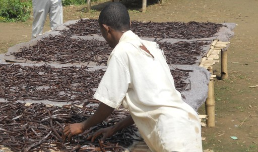 In Madagascar, vanilla beans are cured in the sun. The new General Mills vanilla sourcing program will teach vanilla farmers this process, which can help increase their incomes.