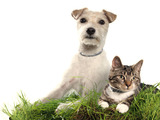 61550-cat-and-dog-wearing-seresto-sm