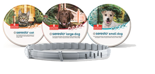 Seresto provides protection against fleas and ticks for 8 months