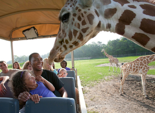 Safari Off Road Adventure takes guests closer than ever before to Six Flags Great Adventure's 1,200 exotic animals. This unique animal attraction is included with theme park admission.