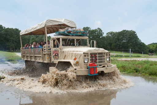 Giant Safari trucks drive guests off road, splashing through ponds and climbing hills on the new Safari Off Road Adventure at Six Flags in Jackson, New Jersey.