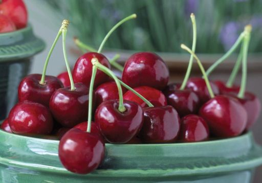 Bowl of NW Cherries