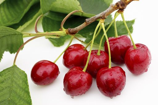 Branch of NW Cherries