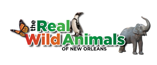 The Real Wild Animals of New Orleans