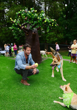 A TAIL WAGGING GOOD DAY - Nate Berkus, designer and dog lover, plays with some four-legged friends at the unveiling of the new $500,000 Dream Dog Park renovation in Lancaster, Pa.  Berkus was also on hand to launch the 2013 Beneful® Dream Dog Park Contest