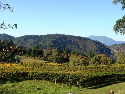 Pride Mountain Vineyards in St. Helena, California offers the best winery tour in the U.S., according to TripAdvisor. (A TripAdvisor traveler photo)