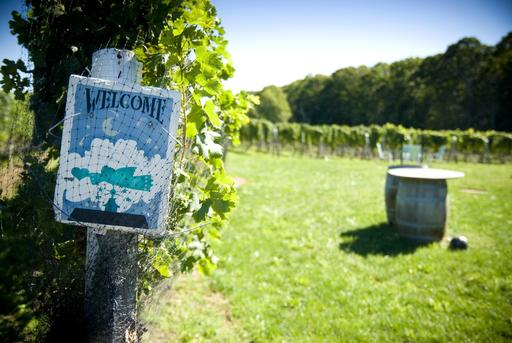 TripAdvisor names Sannino Bello Vita Vineyard in Peconic, New York among the top winery tours in the U.S. (A TripAdvisor traveler photo)