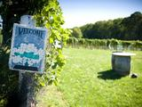 63164-03-sannino-bella-vita-vineyard-peconic-new-york-2-sm