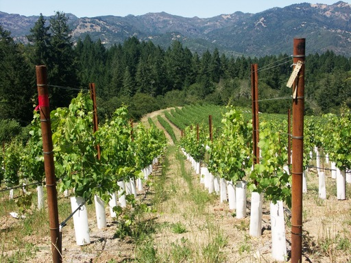 Among the top winery tours in the U.S. is Schramsberg Vineyard in Calistoga, California, according to TripAdvisor. (A TripAdvisor traveler photo)