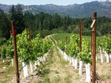 63164-10-schramsberg-vineyard-calistoga-california-2-sm