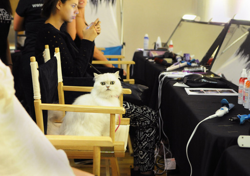 The Fancy Feast cat prepares backstage for the Malan Breton STYLE360 show during New York Fashion Week in New York City. Breton's collection featured four looks inspired by the iconic Fancy Feast cat.