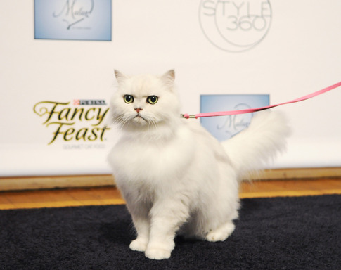 The Fancy Feast cat at the Malan Breton STYLE360 show during New York Fashion Week in New York City. Breton's collection featured four looks inspired by the iconic Fancy Feast cat.