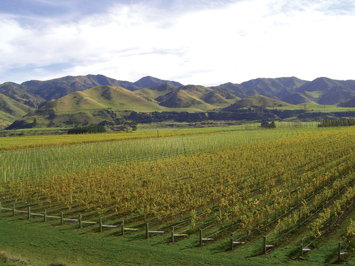 Villa Maria Estate vineyards in the Awatere Valley