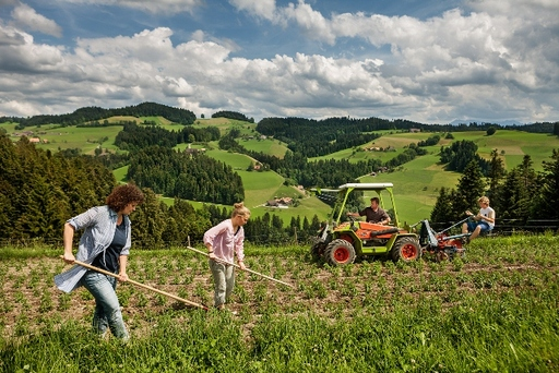 Ricola utilizes more than 100 self-managed farmers to cultivate its herbs in the Swiss mountain regions and no artificial colorings or flavorings are used.