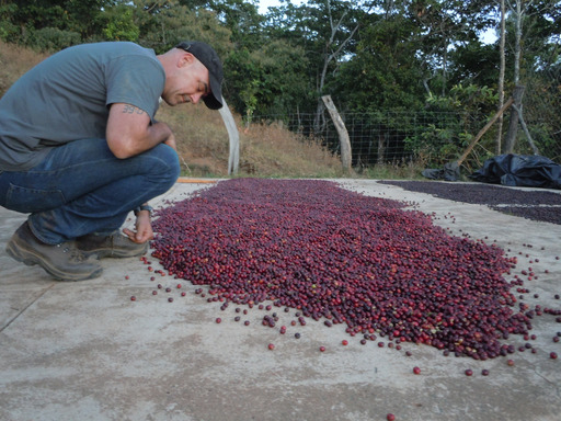 Todd Carmichael inspects a crop of red fruit with coffee bean seeds, drying at a farm in the remote hills of Mexico