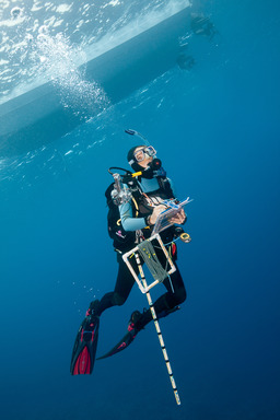 A scientific diver laden with equipment surfaces at the end of a research dive ©iLCP/Michele Westmorland